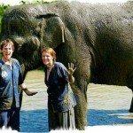 Elephant Mud bath chiang mai