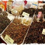 Eat insects at chiang Mai markets, Thailand