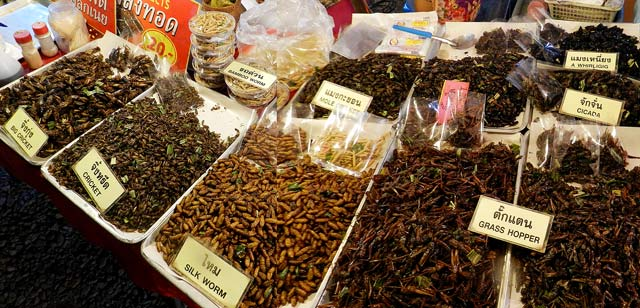 Insects at the Chiang Mai Walking Market