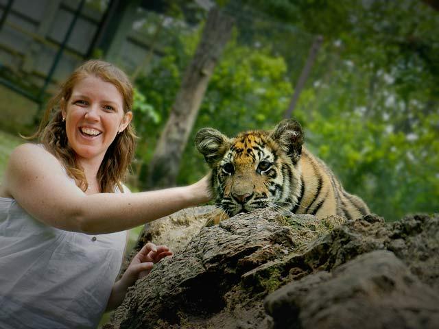 Young Tiger at Tiger Kingdon, Chiang Mai