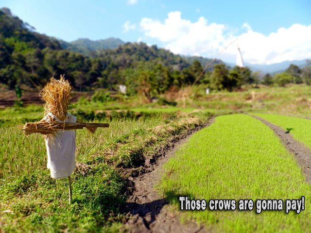 Scarecrow on Trek