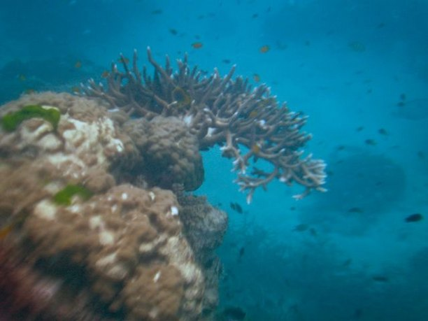 Coral, Great Barrier Reef, Queensland