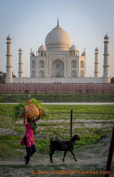 Taj mahal with goat herder