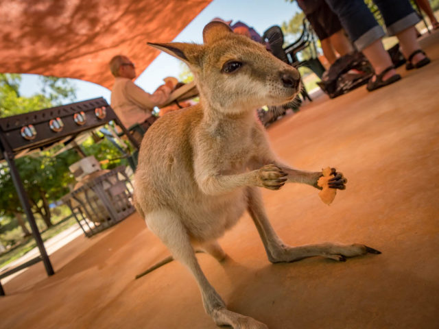 Katherine gorge tours - Travel NT - Walaby