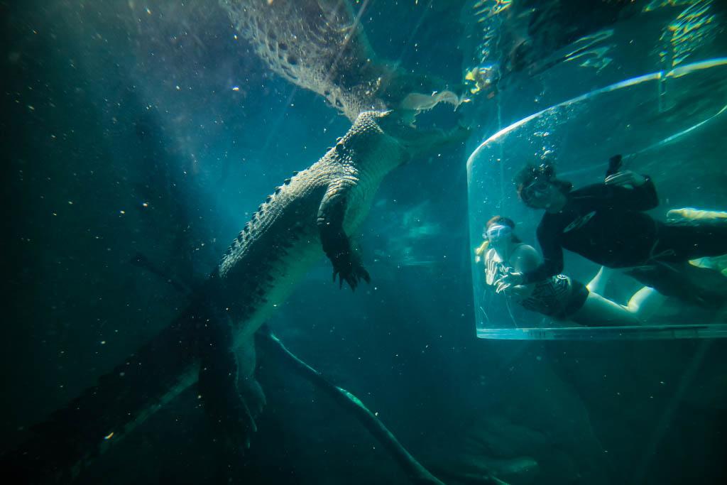 crocodile cage of death