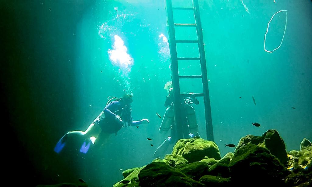 Cenote Dives: The exit ladder at Calavera cenote (Temple of Doom) - cenote diving Tulum Mexico