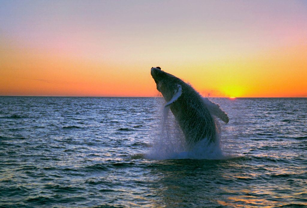 Whale Watching [Stock Image] + ATV! https://guidetoiceland.is/book-holiday-trips/atv-whale-watching