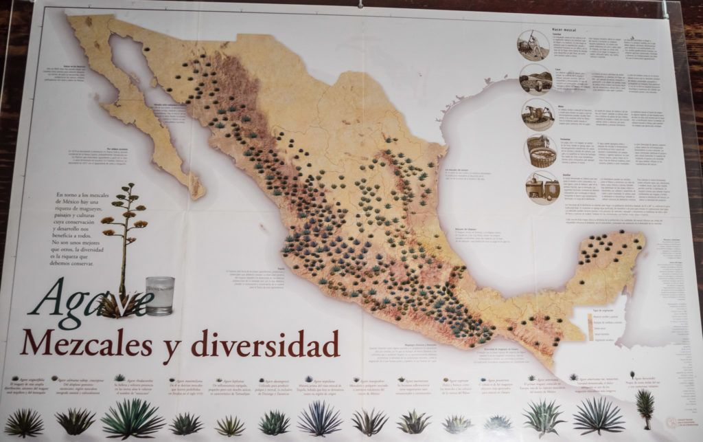 Tequila vs Mezcal: Map of agave diversity across mexico