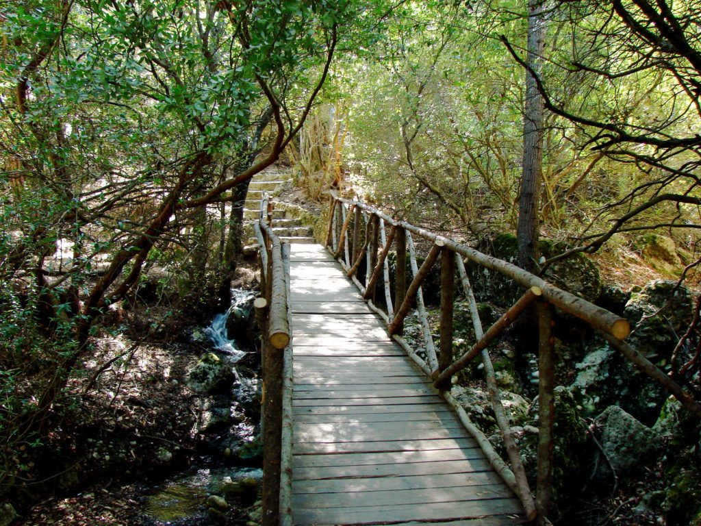 Places To Visit In Rhodes: Valley Of The Butterflies | Rhodes Destinations